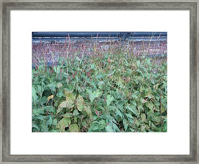 Untitled Framed Print by Hasani Blue