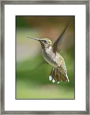Untitled Hum_bird_five Framed Print