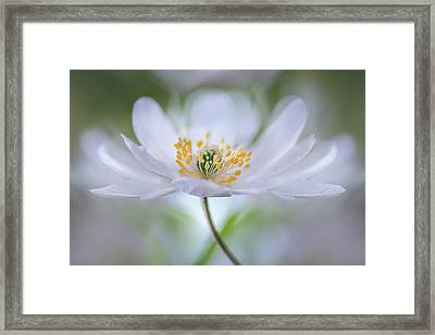 Untitled Framed Print by Mandy Disher