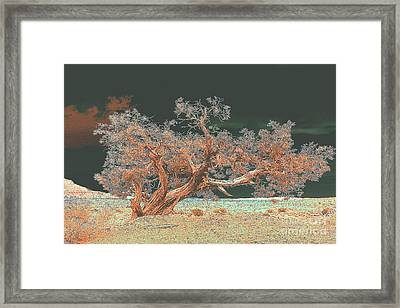 Unusual Tree - Digital Painting Framed Print by Merton Allen