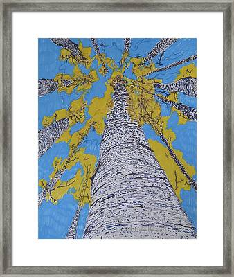 Up At Birch Framed Print by James SheppardIII