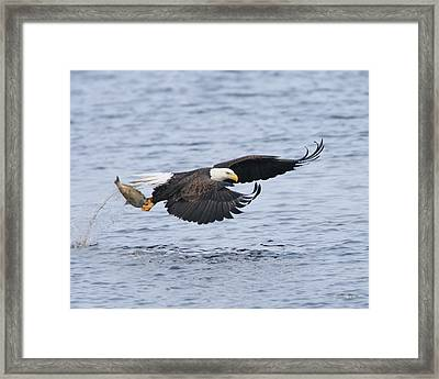 Up Up And Away Framed Print by Gerry Sibell