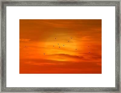 Upon A Sunset Flight Framed Print by Angie Tirado