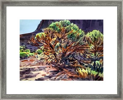 Utah Juniper Framed Print by Donald Maier