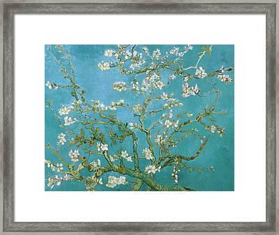 Van Gogh Blossoming Almond Tree Framed Print