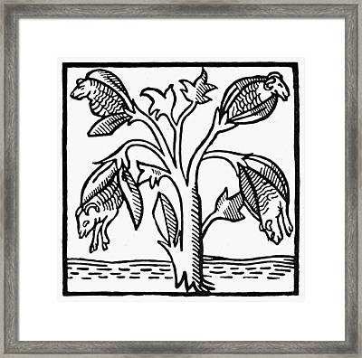 Vegetable Lamb Myth Framed Print by Granger