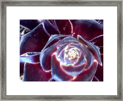 Velvet Rosette Framed Print