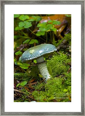 Verdigris Agaric Framed Print by Steen Drozd Lund