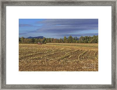 Vermont Cornfield  Framed Print