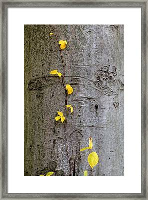 Framed Print featuring the photograph Vine Climber by Deborah  Crew-Johnson