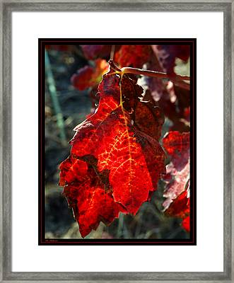 Vine Leaf At Fall Framed Print by Arik Baltinester
