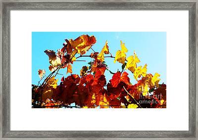 Vineyard 12 Framed Print by Xueling Zou