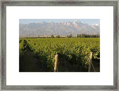 Vineyards In The Mendoza Valley Framed Print by Michael S. Lewis