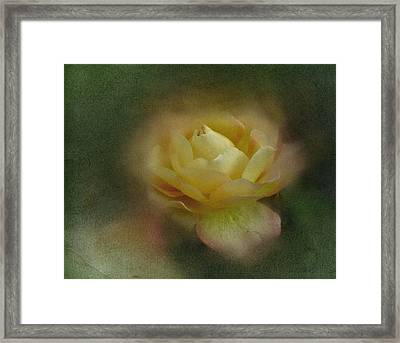 Framed Print featuring the photograph Vintage October Rose  by Richard Cummings