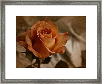 Framed Print featuring the photograph Vintage Orange Rose by Richard Cummings