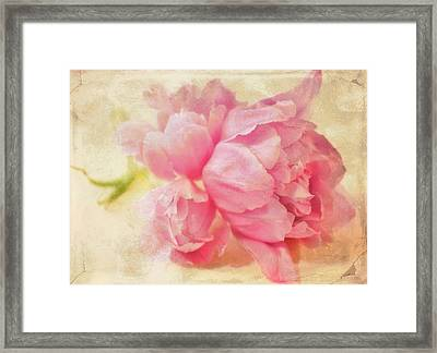 Vintage Pink Framed Print by Cathie Tyler