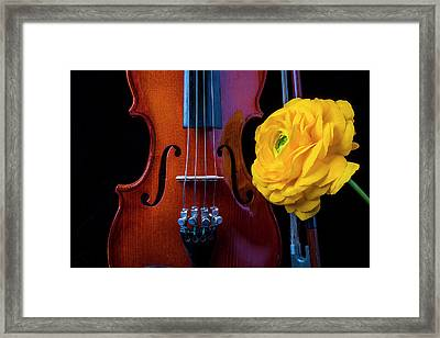 Violin And Ranunculus Framed Print