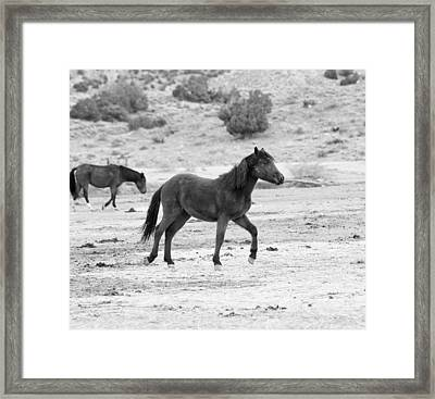 Virginia Range Mustangs Framed Print