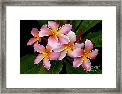 Framed Print featuring the photograph Wailua Sweet Love by Sharon Mau