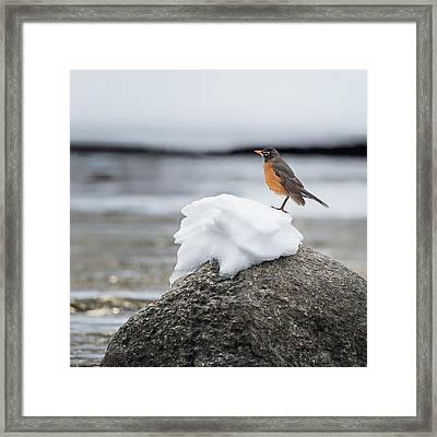 Waiting For Spring Square Framed Print by Bill Wakeley