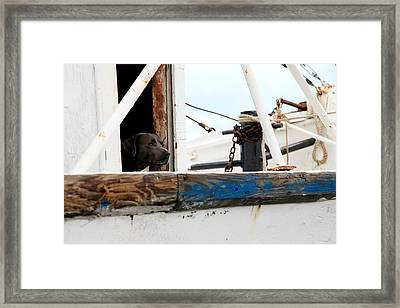 Waiting On His Best Friend Framed Print
