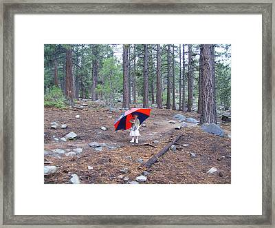 Framed Print featuring the photograph Walking In The Rain by Dan Whittemore