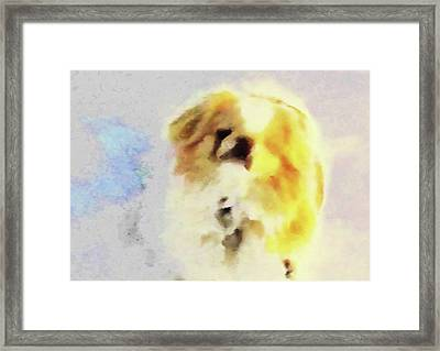 Framed Print featuring the photograph Wasabi, Dog Painted. by Roger Bester