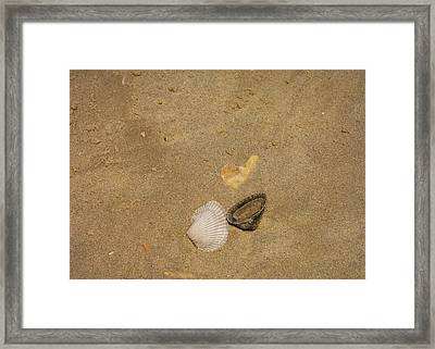 Shells Washed Ashore Framed Print by JAMART Photography
