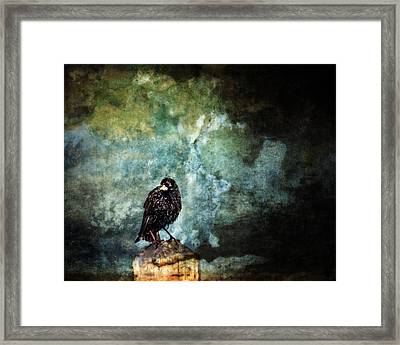Watcher Framed Print by Moon Stumpp