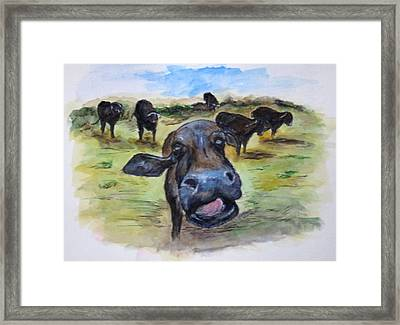 Water Buffalo Kiss Framed Print by Clyde J Kell