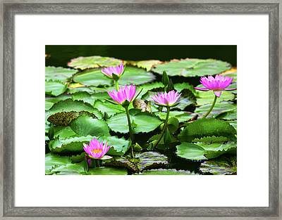 Framed Print featuring the photograph Water Lilies by Anthony Jones