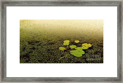 Water Lily Pads Framed Print by Tim Hester