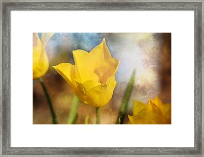 Water Lily Tulip Flower Framed Print