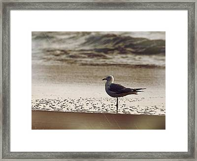 Water Wading Framed Print by JAMART Photography