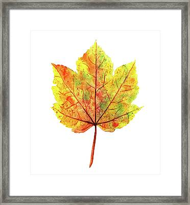Watercolor Autumn Maple Leaf Framed Print