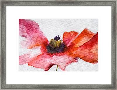 Watercolor Poppy Flower Framed Print