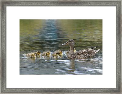 We Are Family Framed Print by Fraida Gutovich
