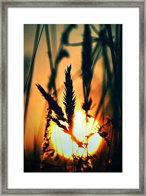 We Are Free Framed Print by Kerry Langel