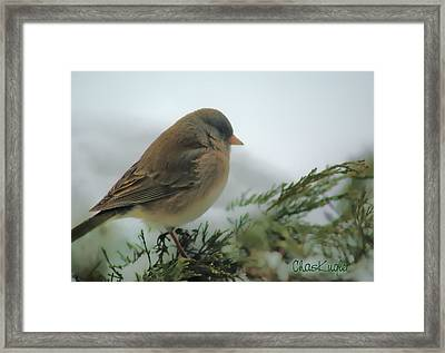 Weathering The Storm Framed Print by Chuck Kugler