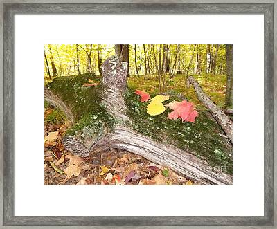 Weatherlog-18 Framed Print by The Stone Age