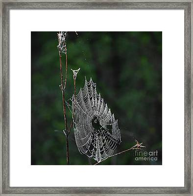 Framed Print featuring the photograph Webs We Weave by Skip Willits