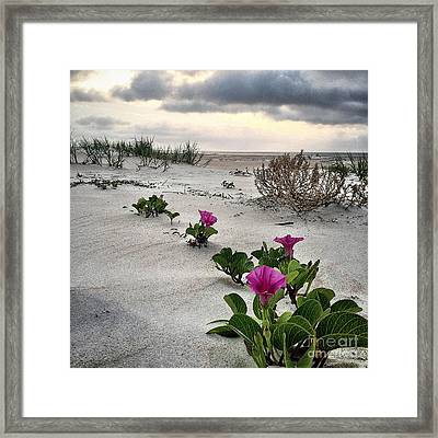 Weekend Glories 6.18.16 Framed Print