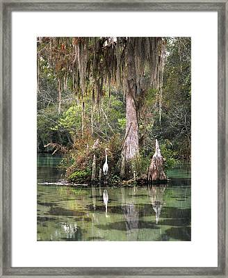 Weeki Wachee River Framed Print