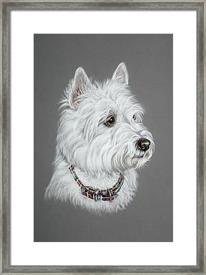 West Highland White Terrier  Framed Print by Patricia Ivy