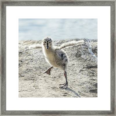 Western Gull Chick Dancing Framed Print