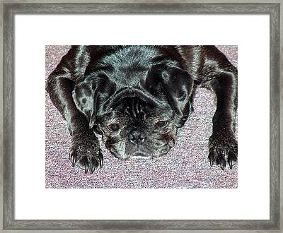 What A Day Framed Print by Lisa Stanley