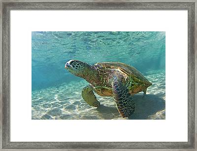 What Are You Lookin At Framed Print by James Roemmling