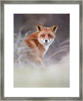 What Does The Fox Think? Framed Print by Roeselien Raimond
