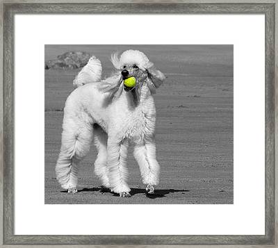 Pedicured Pup Hits The Beach Framed Print