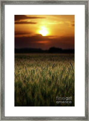 Wheat Field At Sunset, Sun In The Frame Framed Print